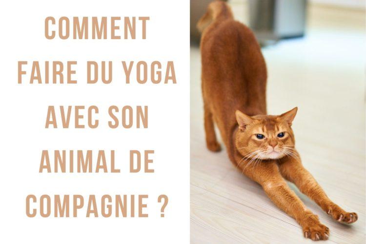"""Cet article traite de comment faire du yoga avec son animal de compagnie, une pratique aux nombreux bienfaits que l'on appelle également """"pet yoga"""" ! Le yoga a de nombreux bienfaits pour la santé, il permet de se détendre et de se rapprocher de la méditation tout en faisant travailler ses muscles profonds. Depuis quelque temps, les animaux se mettent eux aussi à intégrer les salles de yoga ou à se faire une place sur votre tapis. Le """"pet yoga"""" est une nouvelle tendance venue des Etats Unis qui permet de faire du yoga avec son compagnon à poils. Découvrez dans cet article comment partager ce moment avec votre animal !"""